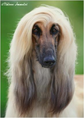 Blondie13