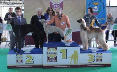bubiForlì