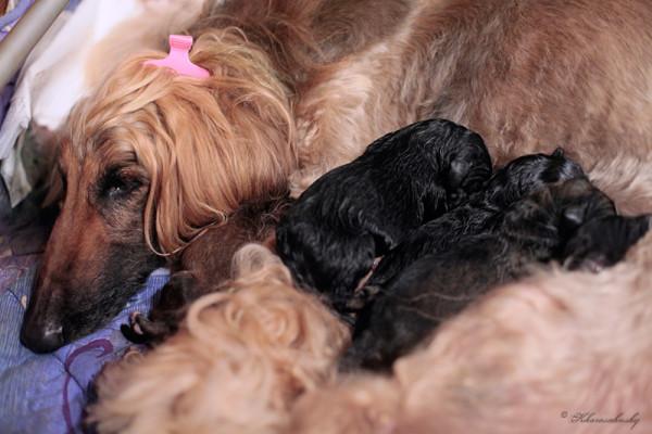 BlondiePuppies1